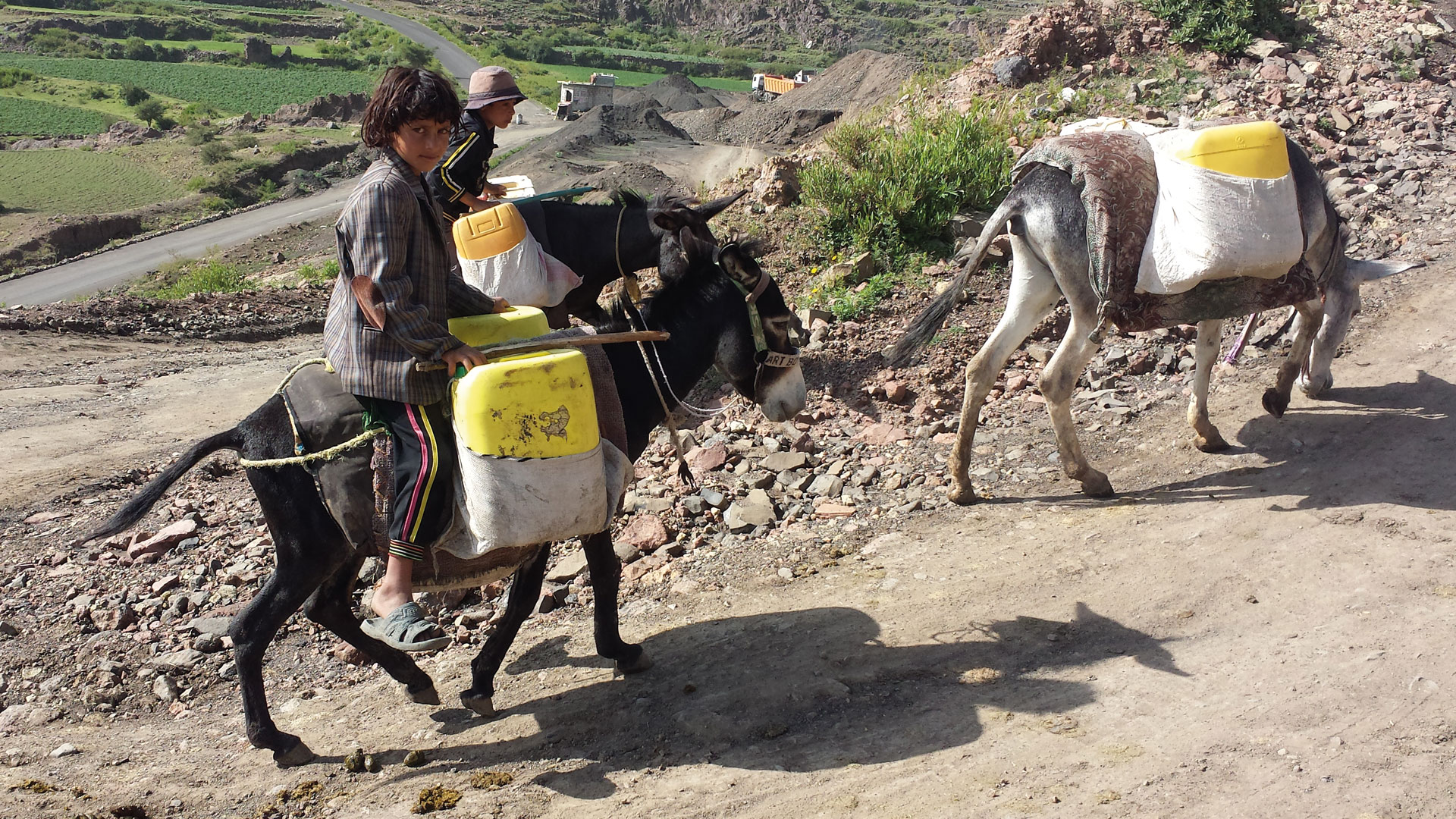 Donkeys are one of the main transport vehicles in Yemen, boys fetching water