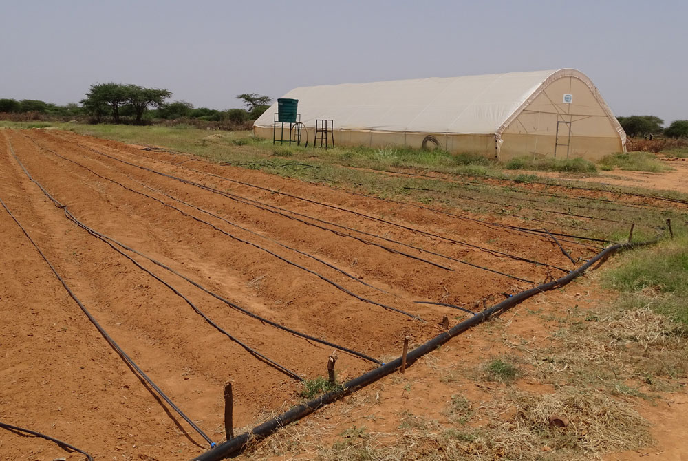 Acriculture in Somaliland